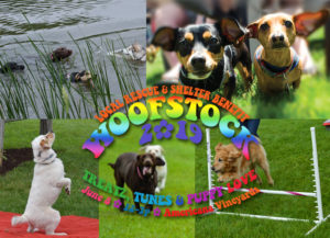 woofstock event at americana vineyards montage